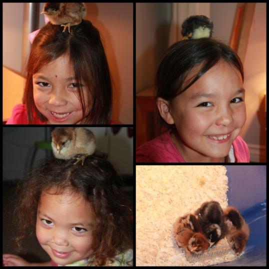 chicks 1 Collage
