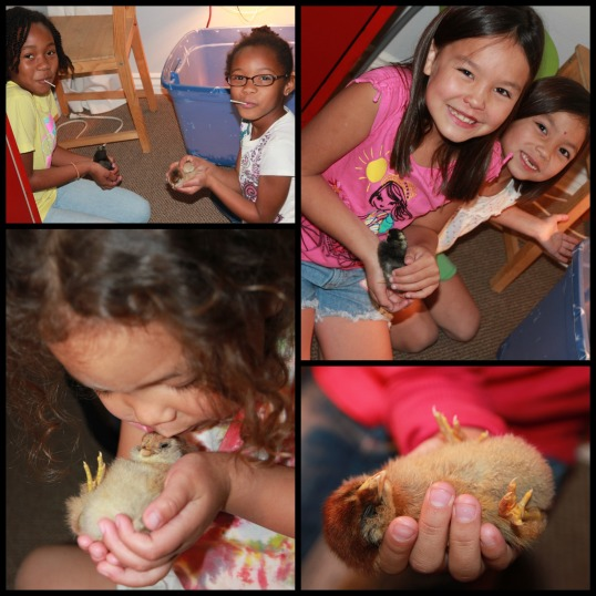 chicks 4  Collage