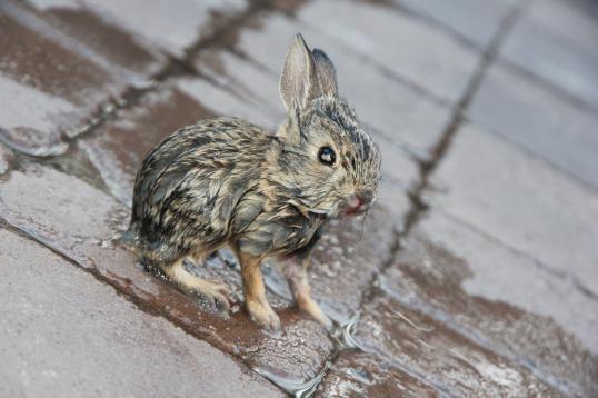 bunny 3