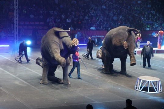 circus 10