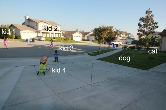 srd 6