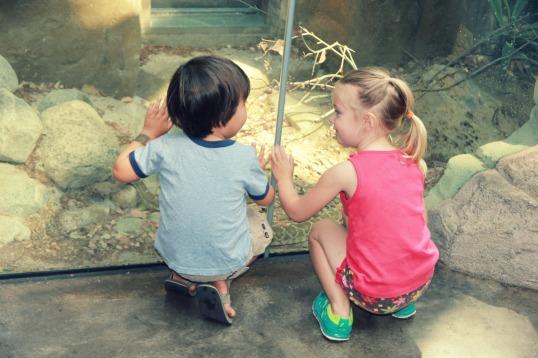 zoo 7